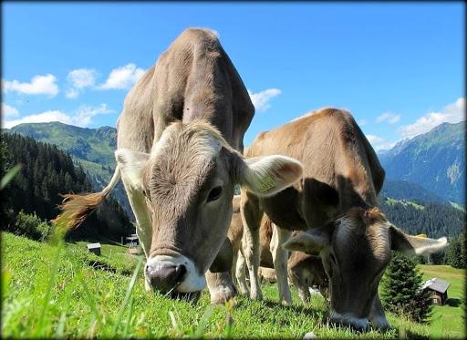 LR 31/2008 art. 24 -INTERVENTI A SOSTEGNO DELL\'AGRICOLTURA IN AREE MONTANE